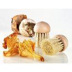 Tellier YC90006 - Brosse à champignon