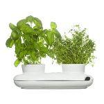 Sagaform Pot à herbes aromatiques Duo en grès (27 cm)
