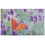Esschert design Tapis de propreté imprimé papillon (45 x 76 cm)