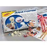 Joustra Anatomie