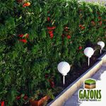 France Green Mur végétal artificiel 1 x 1 m