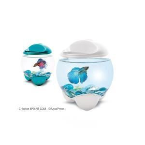 Tetra Betta Bubble - Aquarium design pour Betta