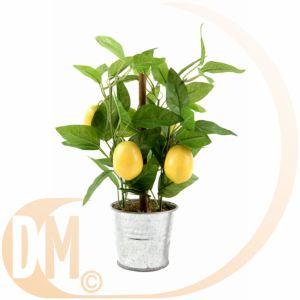 10 offres citronnier en pot comparez avant d acheter en