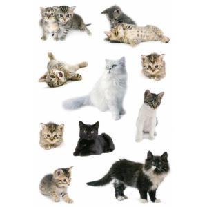 Herma 3433 - Stickers décor Photos de chats