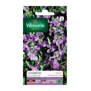 Vilmorin Violette 4 saisons odorante - Sachet graines