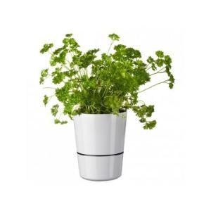 Rosti mepal Pot hydro à réserve d'eau moyen modèle pour plantes aromatiques Ø10 cm