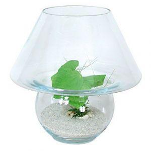 Zolux Kit boule Champignon - Aquarium 12L