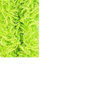 Laine TONIA UNI, Schoeller, pelote de 100 g, 30 mètres, Coloris 06 / jaune vert