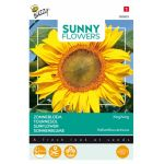 Tournesol - Sunny Flowers - King Kong