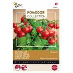 Thème - Tomate Micro Tom F1 - Minuscolo