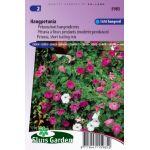 Petunia à fleurs mod. pendants Balcony Mix (modérée pendaison)