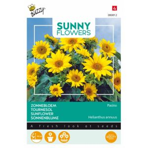 Tournesol - Sunny Flowers - Helianthus debilis Jaune