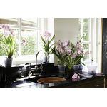 Pot D15 cm provence orchidées Elho transparent