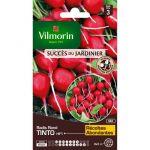Vilmorin Radis tinto, hybride f1 - Sachet graines