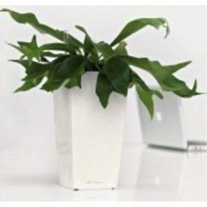Lechuza 14 Premium Maxi Cubico Pot Avec Système D'Arrosage Violet Pastel