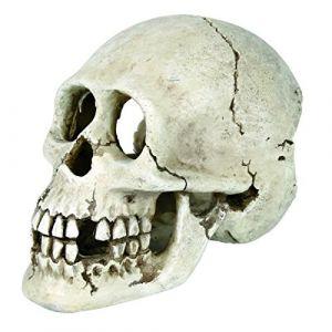 Trixie Crâne pour aquarium Beige 15 cm