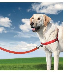 PetSafe Harnais Easy Walk