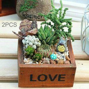 WeWoo Pot de fleur 2PCS Plant Mini Boîte, Livraison Couleur Aléatoire