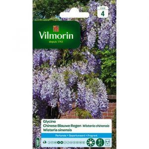 Vilmorin Glycine graines de fleurs varié