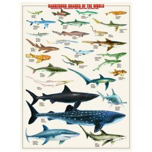 Eurographics Puzzle Requins dangereux 1000 pièces