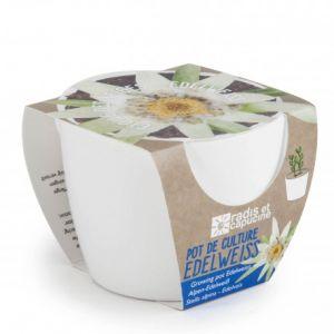 Radis et capucine Mini kit céramique Edelweiss