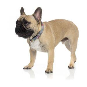 Fuzzyard Laisse néoprène Coachella L - 140 x 2,5cm - Pour chien