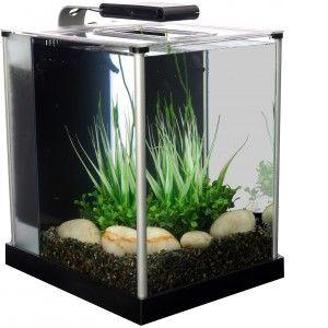 Acheter Un Aquarium Comparer Les Prix