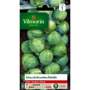 Vilmorin Chou sanda 2 g