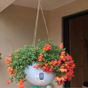 WeWoo Pots de fleurs en plastique accrochant pot de fleur de de suspension avec la chaîne accrochante, taille moyenne: 23.2 * 15.7cm, distribution aléatoire de couleur