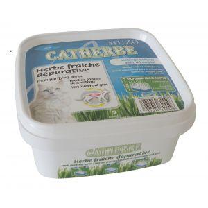 Muzo Catherbe - Herbe dépurative à faire pousser Boite 220g.