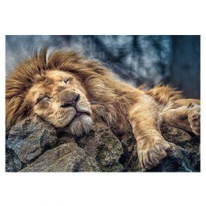 Trefl Puzzle Lion