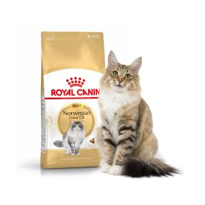 Royal Canin Feline Breed Nutrition Norwegian Forest Adult - Sac 2 kg