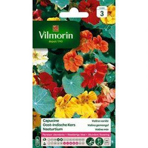 Vilmorin Capucine valina varié jaune à rouge