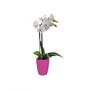 Elho Pot de fleurs - brussels orchidée haut 12,5cm cerise - 12.7 x 12.7 x 15.2 cm