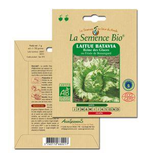La Semence Bio Graines de Laitue Batavia bio Reine des Glaces