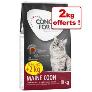 Concept for Life 10kg Maine Coon Adult - Croquettes pour Chat