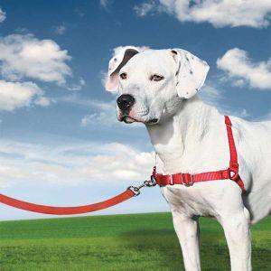 PetSafe Harnais pour chien Easy Walk taille M