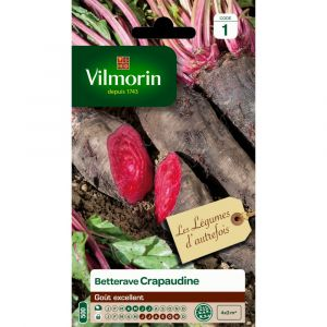 Vilmorin Betterave rouge crapaudine 4 g