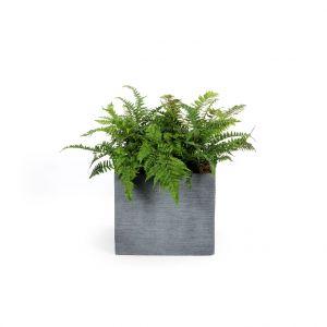 Pot carré bas STREAM S/4 anthracite H.38 cm