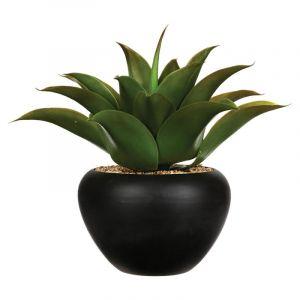 Aloe Vera Céramique Vert