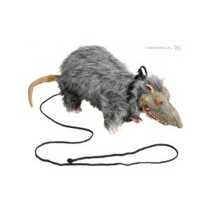 Rat en laisse