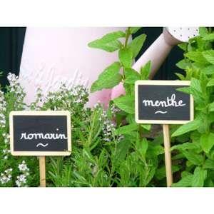 La cordeline Etiquette à planter