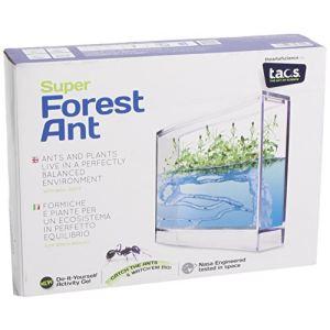 Super forêt des fourmis