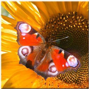 Eglo Image papillon avec quatre LED