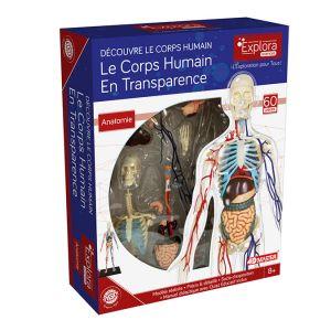 Mgm Explora - Anatomie squelette corps humain transparent - Expérience anatomie