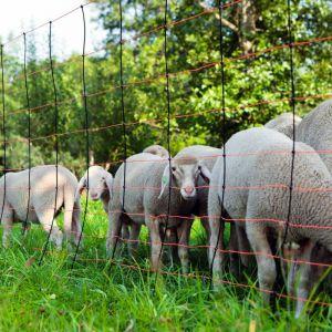 Kerbl 27211 - Filet pour moutons TitanNet 90 cm
