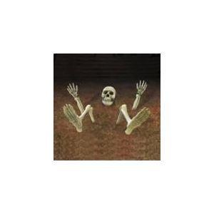 Décoration squelette