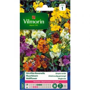 Vilmorin Giroflée ravenelle simple 1.5 g