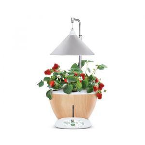 Kitchen gardening Jardin d'intérieur Vittoria avec Kit de démarrage et puce NFC - Couleur Bois