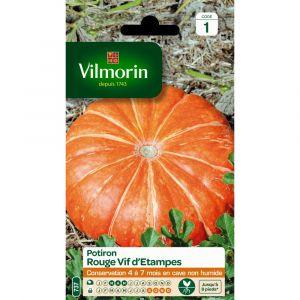 Vilmorin Potiron rouge vif d'etampes 6 g